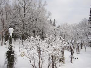 雪景色 花木林
