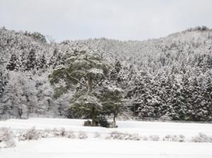 雪景色 ダモの木
