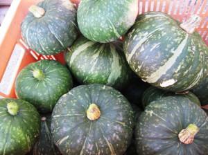 収穫 かぼちゃ